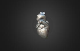 Heart 3D Model
