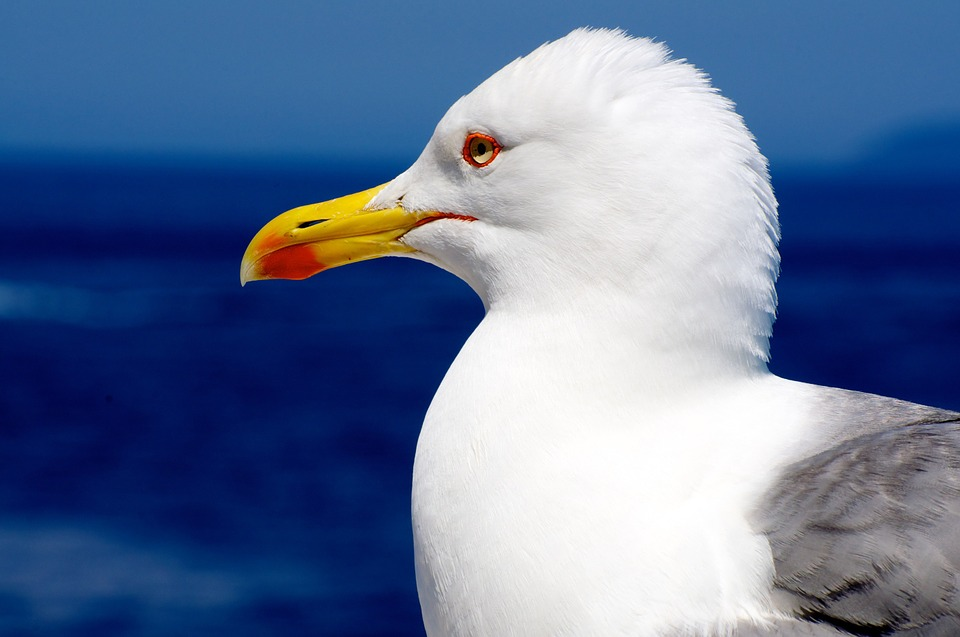 seagull, fly, prosthetic flippers