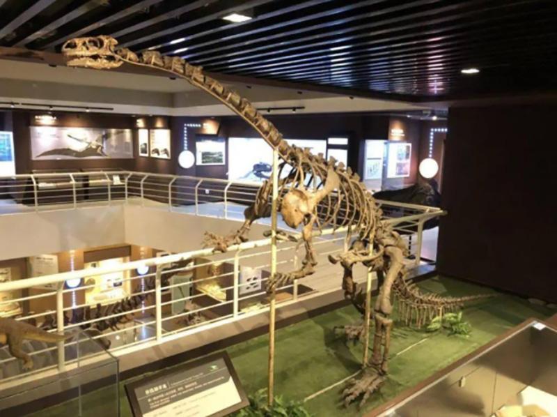 lufengosaurus skeleton for exhibition